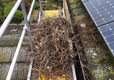 Jackdaw nesting materials under solar panels