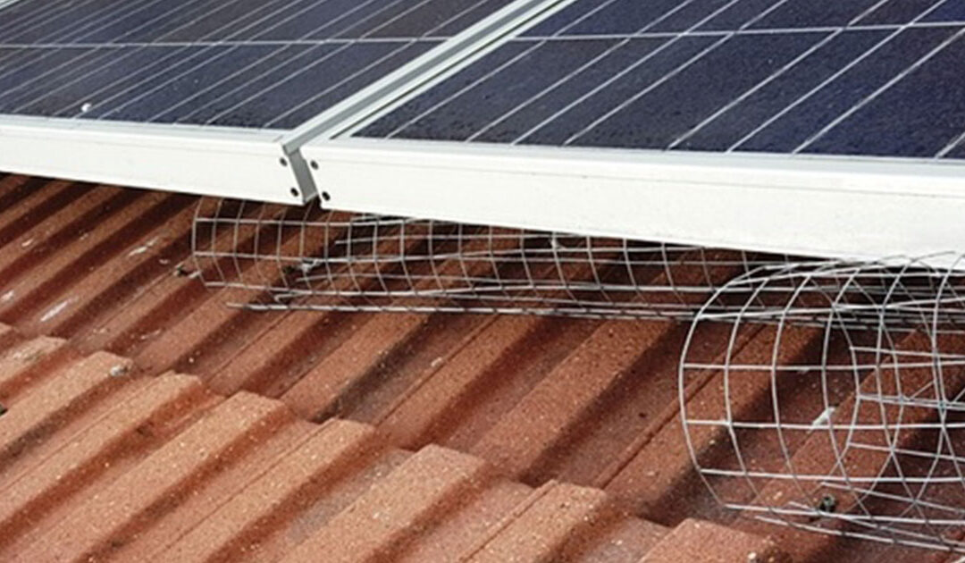 Pigeon Proofing for Solar Panels