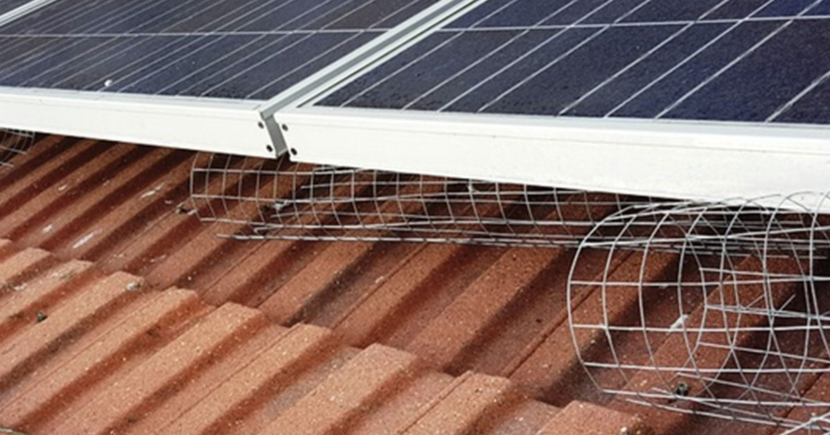 Pigeon-Proofing-for-Solar-Panels